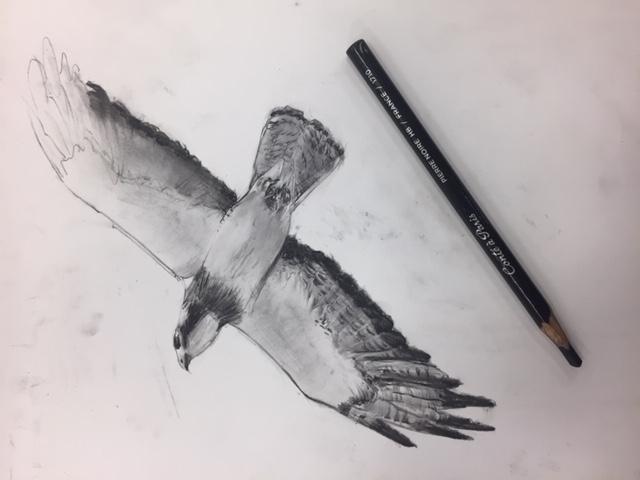 Bird Charcoal Study